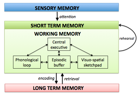 a better understanding of how short term memory works in humans It is usually desirable to study memory in humans because we have the ability our understanding of memory has benefited short term memory and.