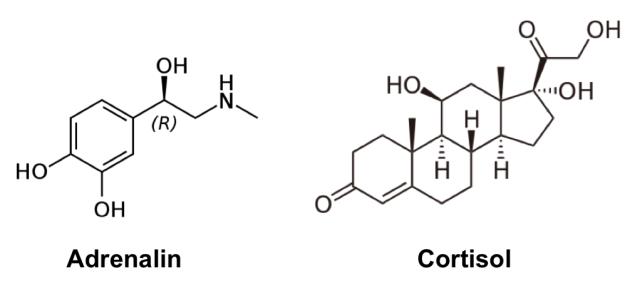 Adrenalin&Cortisol